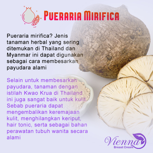 white-Pueraria-Mirifica-Recovered.jpg